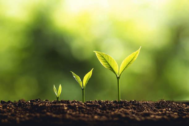 El espíritu emprendedor para crecer profesionalmente y personalmente
