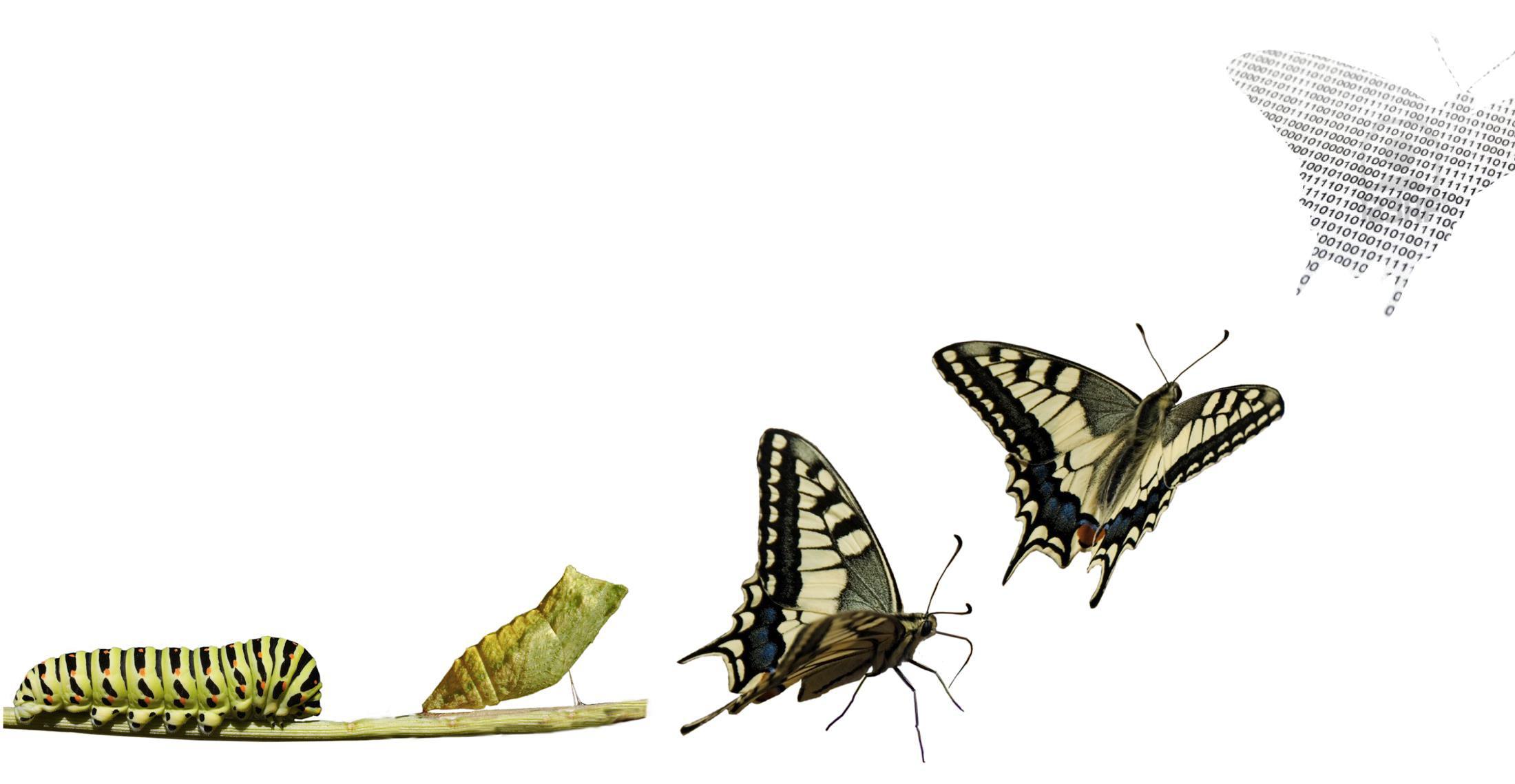 Redarquía y cambio organizacional