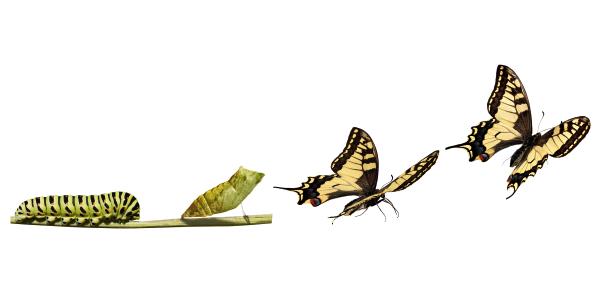 Neurok: Una manera diferente de abordar la transformación digital